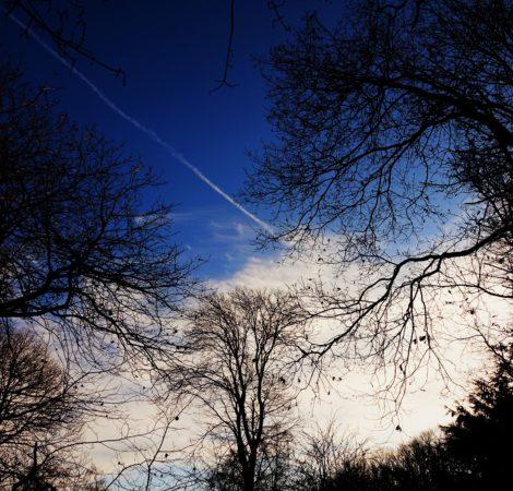 """""""Winter Trees by Rachel Leonardi"""