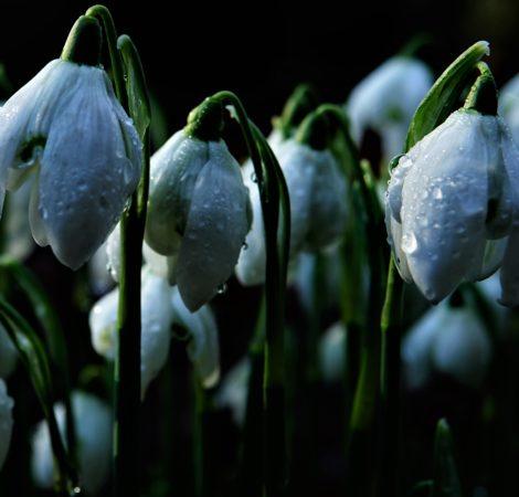 """Snow drop"" by Rachel Leonardi"