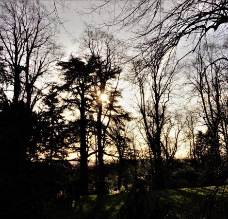 """""""Sun tree"""" by Rachel Leonardi"""